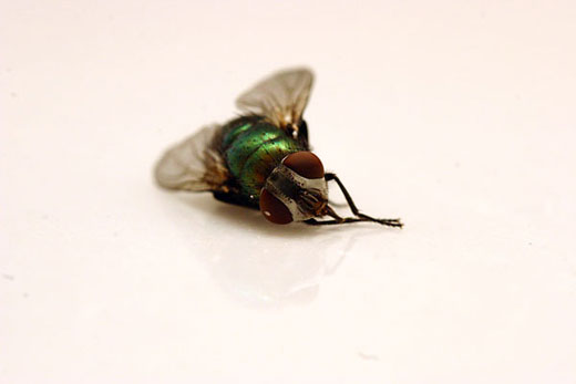 RegisterFly is not run by actual flies.
