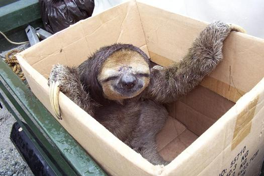 Step 1. Cut a hole in the box. Step 2. Put a sloth in that box.