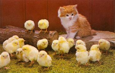 Hot chicks!
