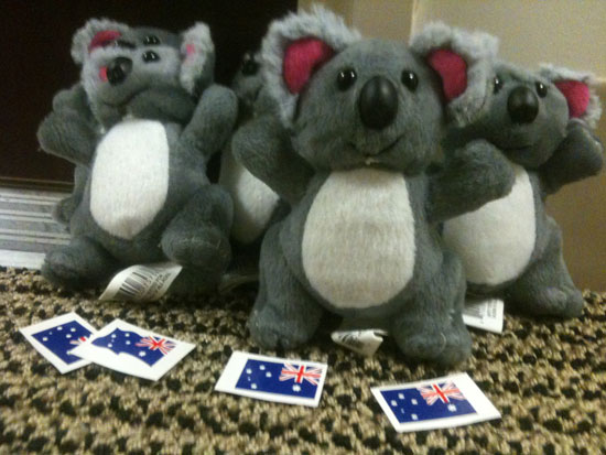 These koalas come bearing gifts - temporary tattoos!