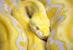 Python Deployment DreamHost