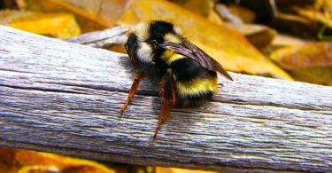A BumbleBee on a Log - Because we love bees and a green planet!